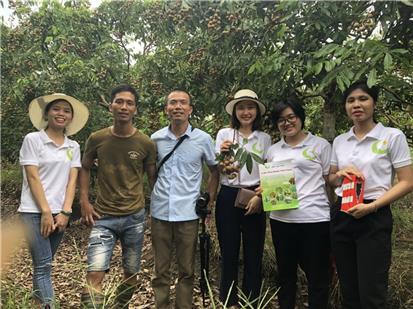Mô hình nhãn áp dụng Chế phẩm sinh học HLC tại Hưng Yên được mùa được giá