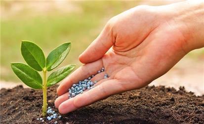 Ngộ độc dinh dưỡng trên cây trồng và biện pháp xử lý