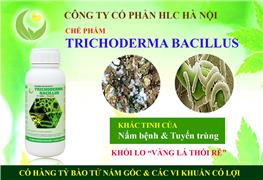 TRICHODERMA - BACILLUS