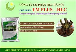 EM PLUS - HLC